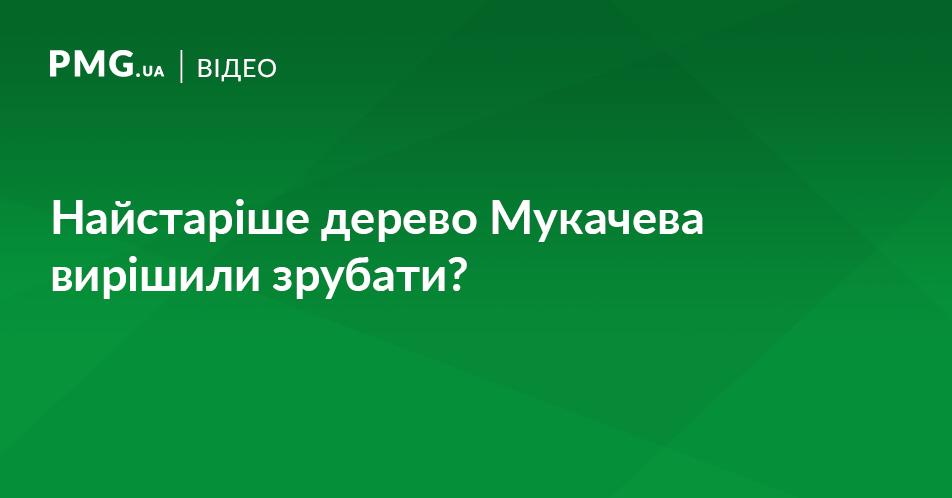 У Мукачеві вирішили зрубати найстаріше дерево міста?