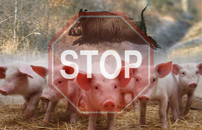 Африканська чума свиней: на Іршавщинні ввели карантинні заходи