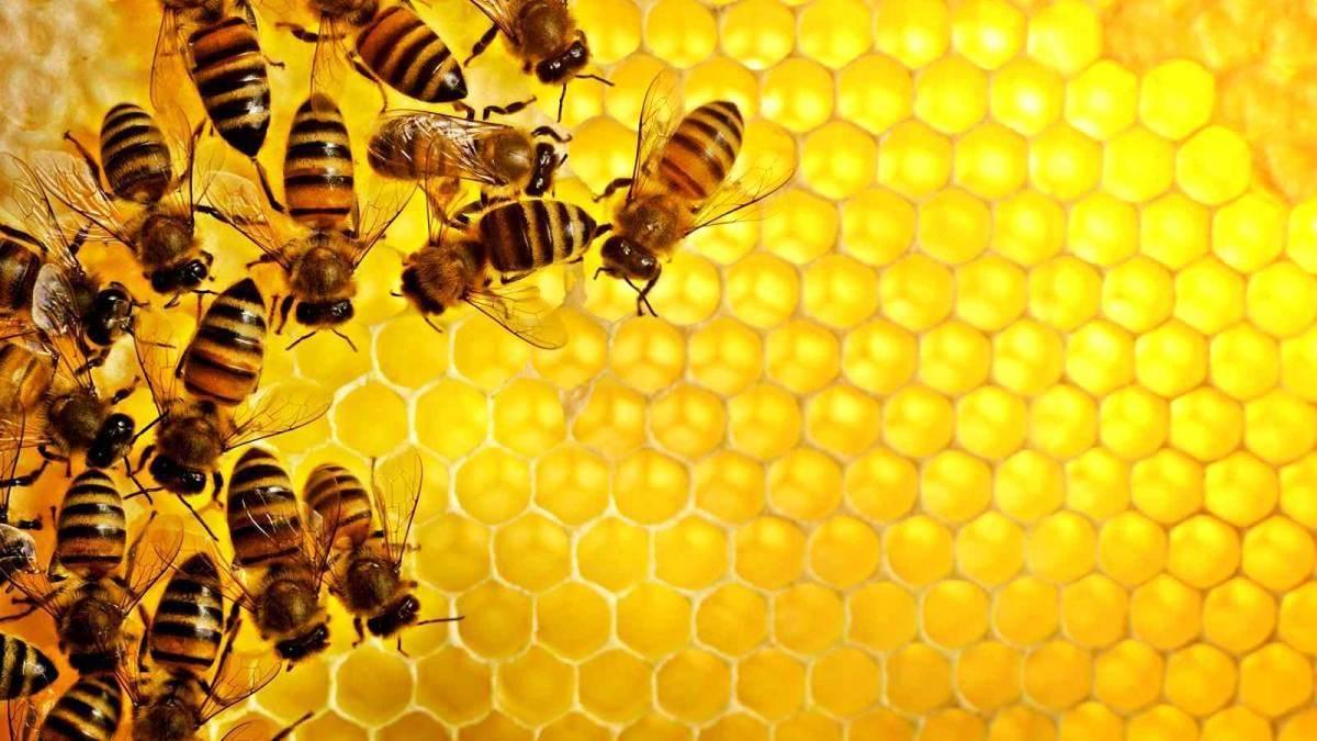 Бджоли гинуть в усіх областях України, окрім Закарпатської