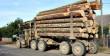 Рада ввела кримінальну відповідальність за контрабанду лісу