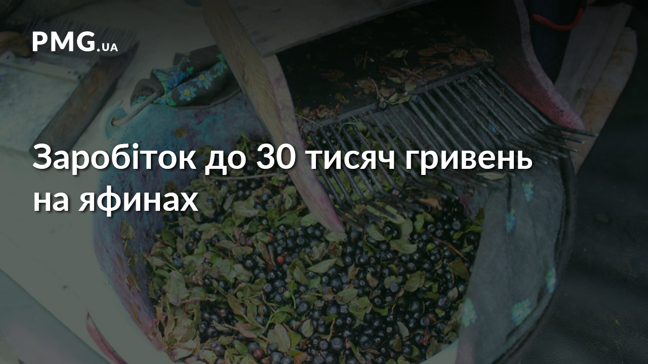 Заробіток до 30 тисяч гривень: як закарпатці збирають яфини