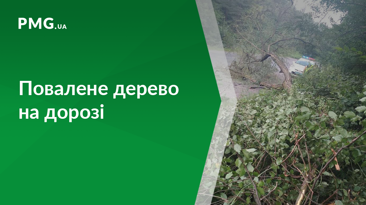 На Іршавщині на дорогу впало дерево