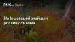 На Іршавщині виявили рослину-хижака
