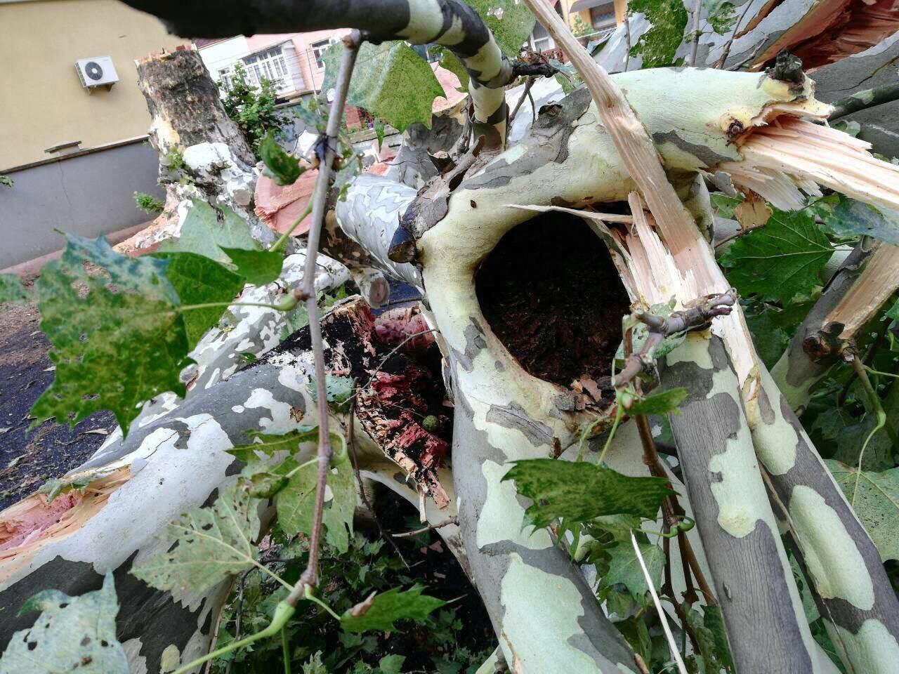 У Мукачеві на території однієї з шкіл вирубали гнилі дерева