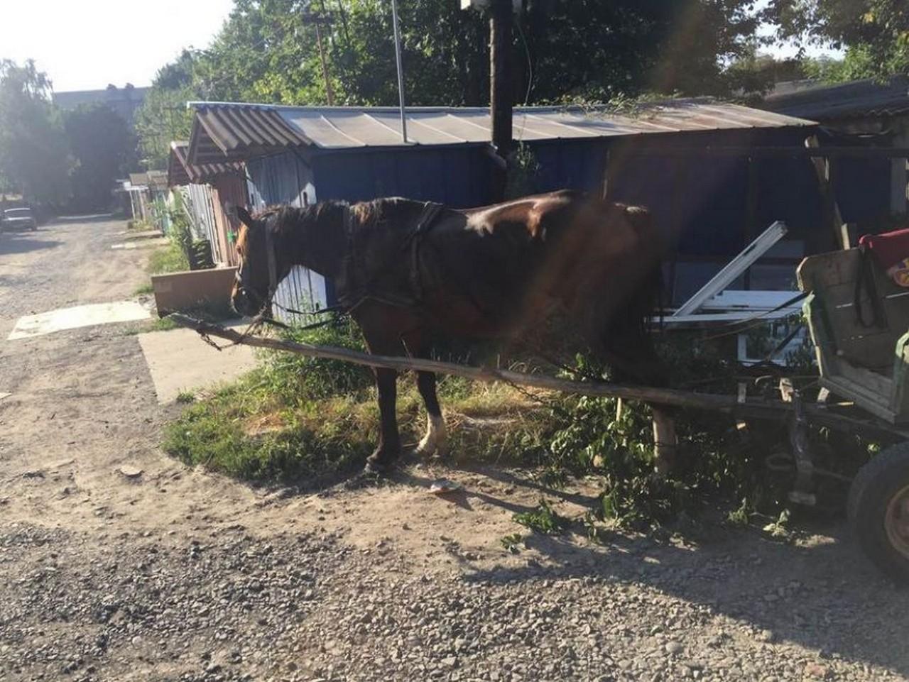 У Мукачеві муніципали склали адмінпротоколи за випасання коней