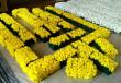 В Ужгороді почали працювати над масштабною квітковою композицією