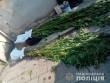 Мукачівець скоїв правопорушення: поліція розповіла подробиці