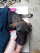 В Ужгороді з транспортного мосту скинули собаку