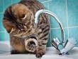 Один із мікрорайонів Мукачева сьогодні буде без води