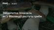Закарпатка показала, як у Фінляндії ростуть гриби