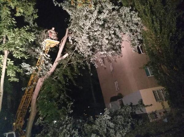 В Ужгороді дерево впало на багатоповерхівку