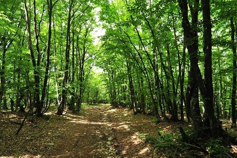 У лісі знайшли труп