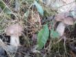 Закарпатці потрохи відкривають грибний сезон: опубліковано фото