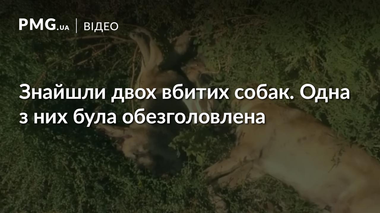 В Ужгороді знайшли двох вбитих собак. Одній із них відірвали голову