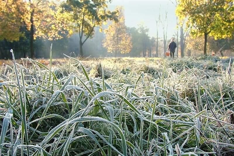Йде сильне похолодання: у горах очікують заморозки та мокрий сніг