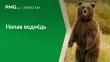 На Закарпатті ведмідь наробив біди?