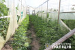 Поліція вилучила понад 3 тисячі нарковмісних рослин та 134 кілограми марихуани