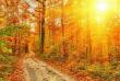 Синоптик розповіла, як довго триватиме потепління на Закарпатті
