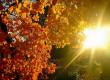 Бабине літо: синоптики розповіли, чого чекати від погоди цього тижня