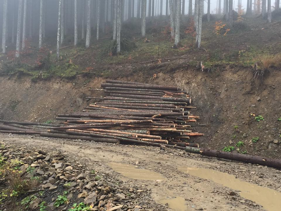 На Закарпатті масово вирубують ліс. Чиновників запитали, чому вони дають на це дозвіл.