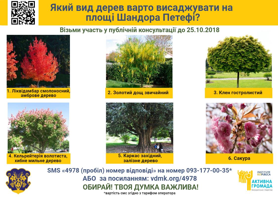В Ужгороді триває четверта публічна консультація: які дерева садити на пішохідній частині площі Шандора Петефі