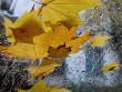 На Закарпаття насуваються холоди та дощі