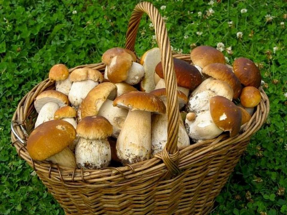 У селі Дубриничі на Перечинщині продають білі гриби, підберезники і підосичники