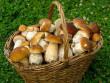 На Закарпатті вже продають гриби: де і за скільки