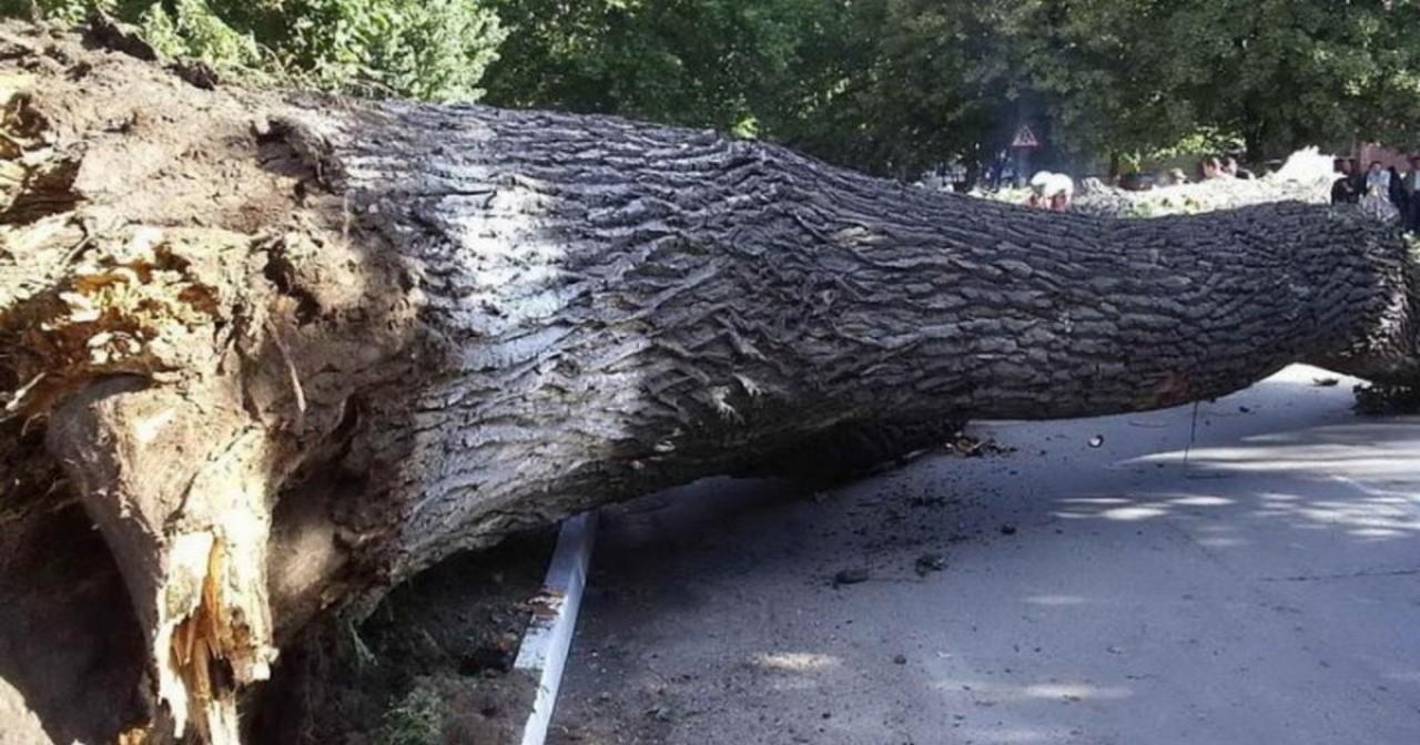В Іршавському районі між селами Горбок і Доробратово дерево впало на проїзджу частину дороги та на автомобіль Opel Astra H