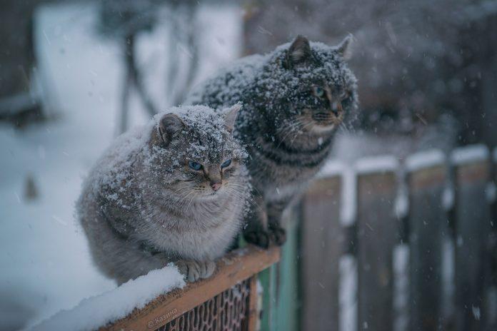 Погода на Закарпатті у листопаді: допоки буде тепло і коли випаде сніг