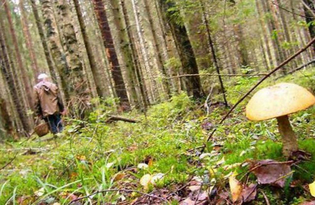 У лісі біля села Сімерки Перечинського району заблукав 48-річний чоловік