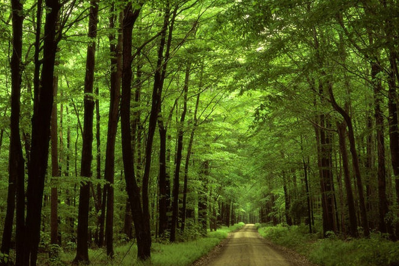 Закарпатця, який вчора зник у лісі поблизу села Сімерки, що на Перечинщині, знайшли