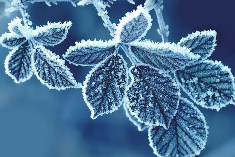 Мороз до -14: синоптик Леонід Горбань розповів, що з 22 листопада прийде похолодання