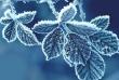 Мороз до -14: коли у листопаді очікувати холоди