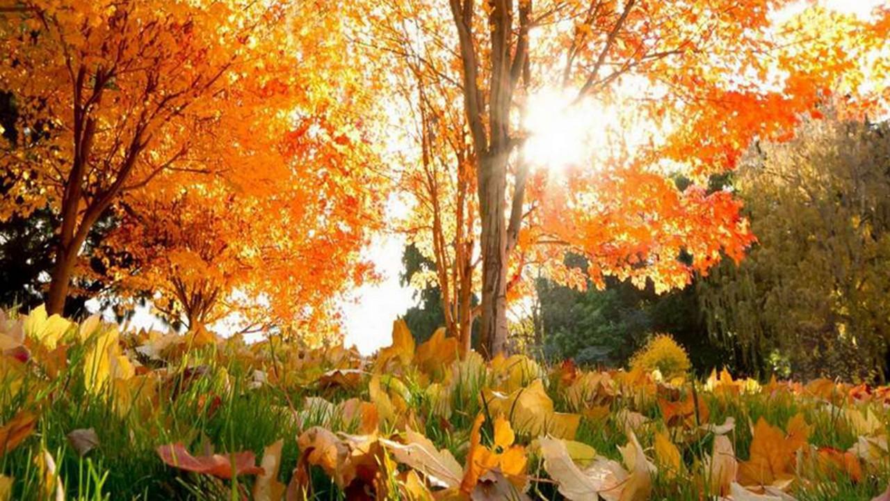 На початку листопада на Закарпатті зафіксували температурні рекорди