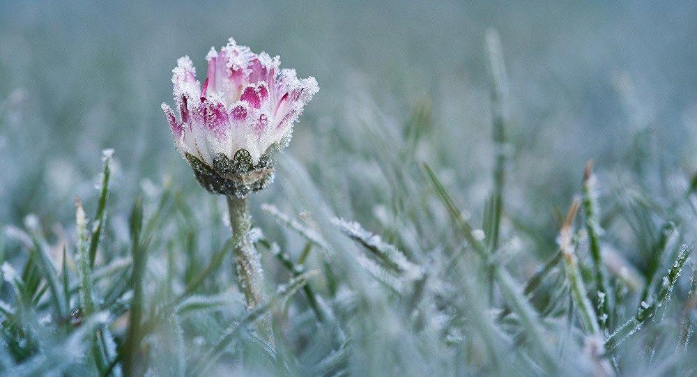 Частину України накриють морози та мокрий сніг, а в Закарпатті збережеться відносне тепло