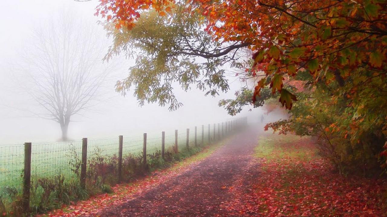 Синоптики попереджають закарпатців про тумани та низькі температури