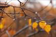 Погода на найближчі дні: синоптики попереджають про зниження температури і опади