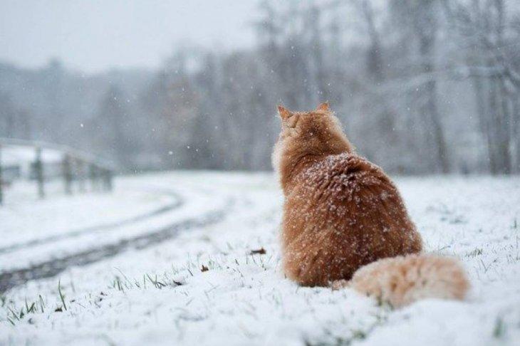 У Києві та Київській області очікують снігопад, на Закарпатті збережеться відносне тепло