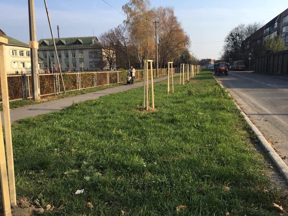 У Мукачеві проводять осінню толоку і висаджують сакури