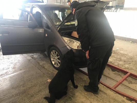 Як службовий собака допоміг прикордонникам знайти сховок