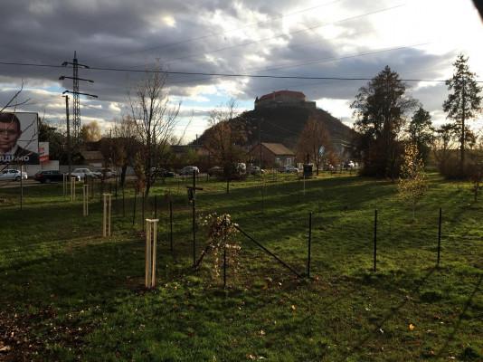 У Мукачеві висадять понад 300 дерев