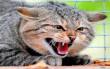 Через укус кішки жінка підхопила смертельну хворобу