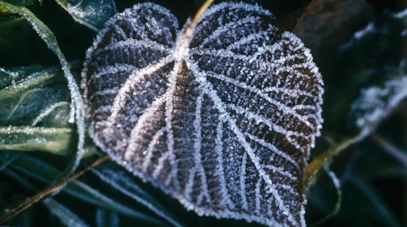 Погода на Закарпатті: у горах очікують морози, можливі опади