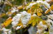 На Закарпатті оголосили штормове попередження: очікується сніг