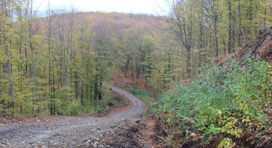 Лісівники відремонтували лісову дорогу
