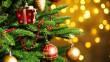 В області встановили першу новорічну ялинку
