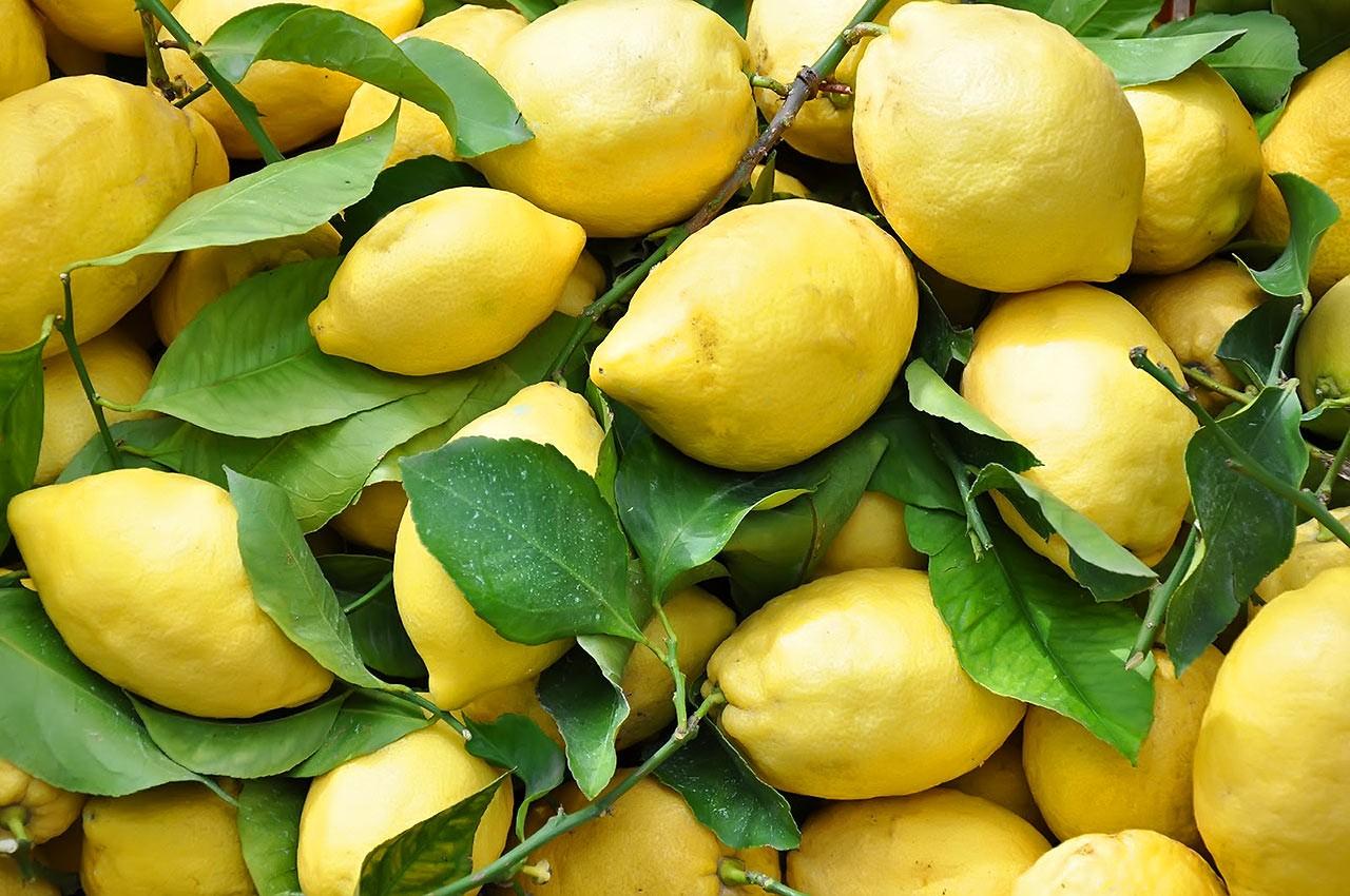 У Виноградові в теплицях жінка вирощує гігантські лимони