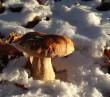 Закарпатець знайшов гриби у снігу