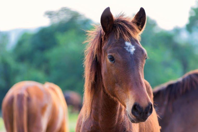 Житель села Горонда вкрав із ферми коня і переховувався від слідства